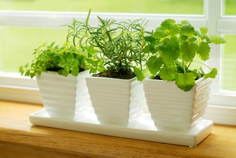 anti-mosquito-plants-indoors