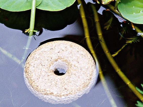 How to kill mosquito larvae 5 brilliant tactics pest hacks for Mosquito donuts