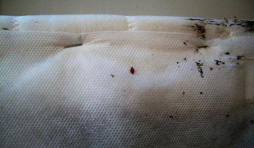 How To Check For Bed Bugs And Kill Them On The Spot