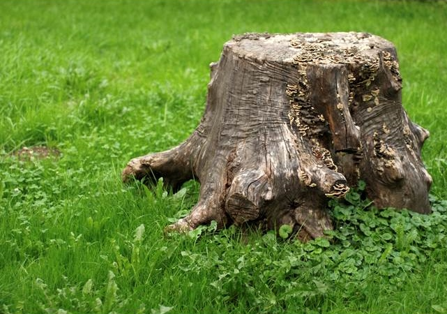 what causes termites