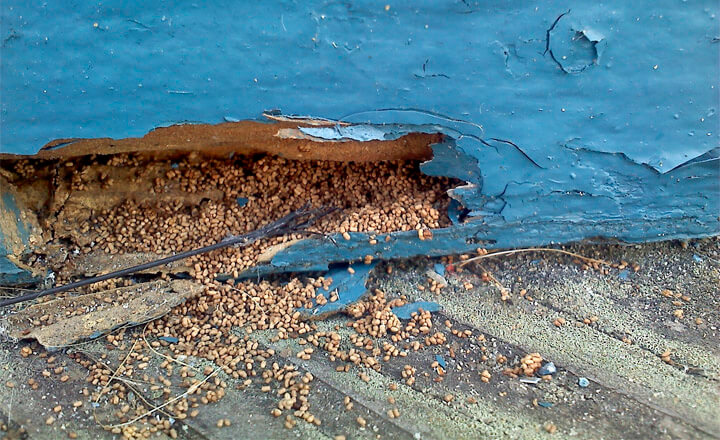 Do Termites Leave Sawdust ~ Telltale termite signs to look out for pest hacks