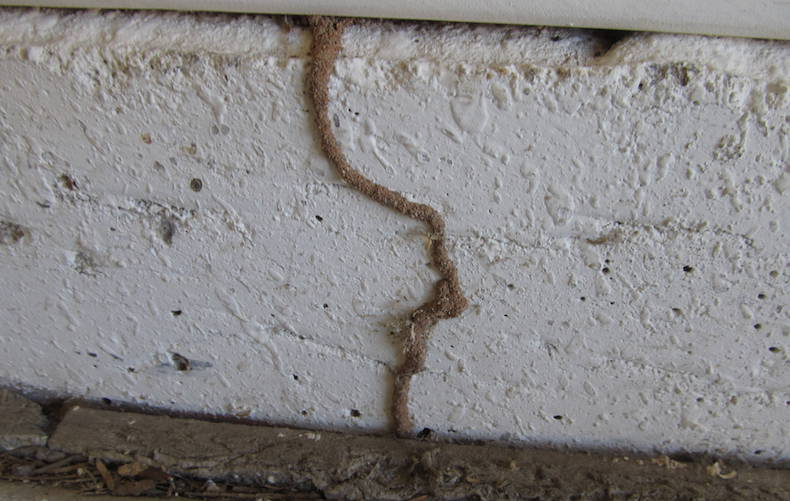 termite signs