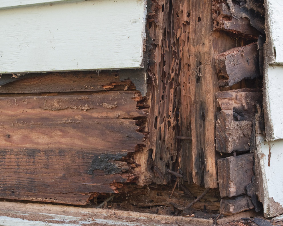 What Causes Termites And Termite Prevention Methods That