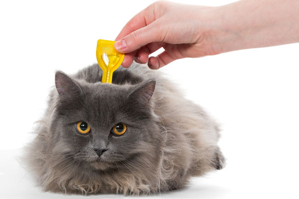 Best Flea Treatment For Cats Top 9 Options Reviewed And