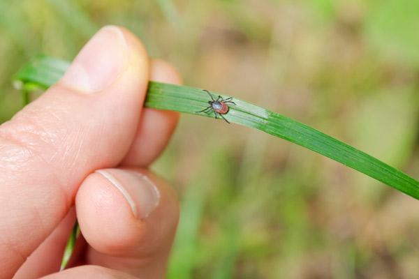 How to Keep Ticks Away For Good: Best Tick Repellent ...