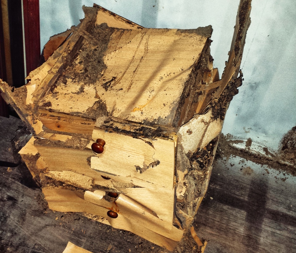 Termite Facts And Faqs 39 Cause Knowing Is Half The Battle Pest Hacks