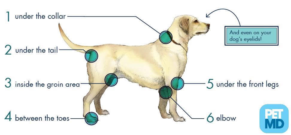 where do ticks hide on dogs