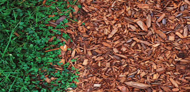 Cedar Wood Chips ~ How to get rid of ticks in your yard simple steps that