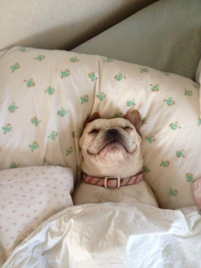 How To Get Rid Of Fleas In Bed In 6 Simple Steps Pest Hacks