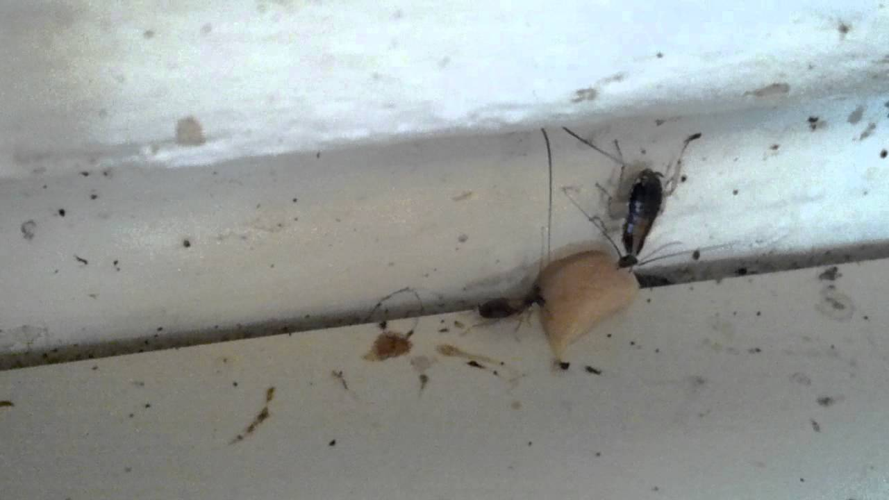 best-thing-to-kill-roaches