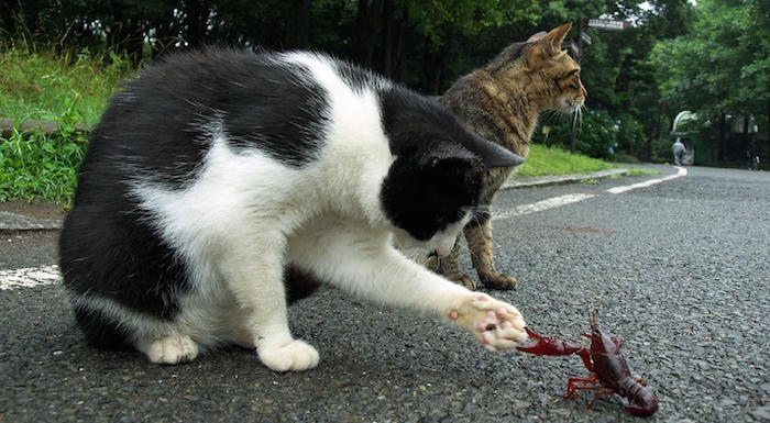 do cats kill scorpions