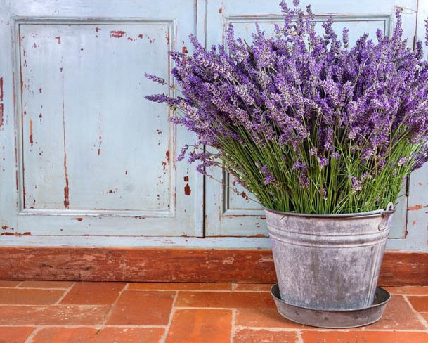 does lavender repel scorpions