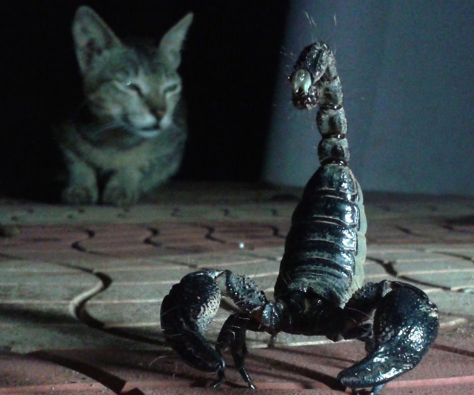 What's the Best Scorpion Repellent? How to Keep Scorpions Away