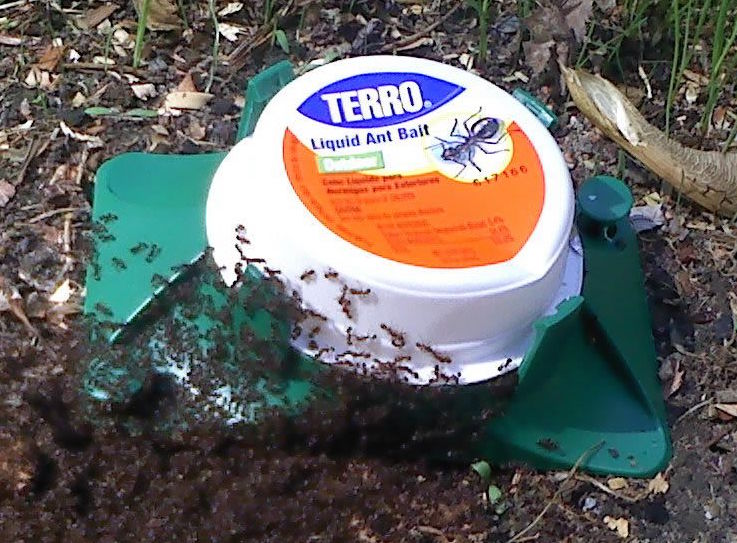 How to Get Rid of Ant Hills: Top 10 Best Ways to Destroy an
