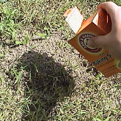Get rid of ant hills