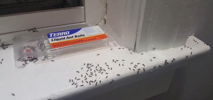 best ant traps